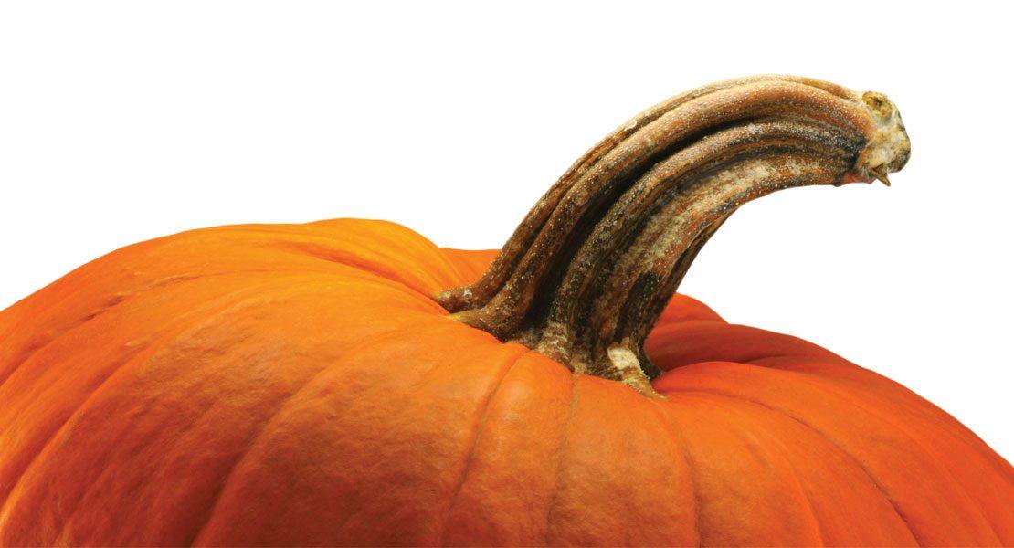 Fall Fun: Pick-Your-Own Farms