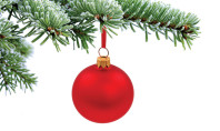 O Tannenbaum: A Christmas Tree Primer
