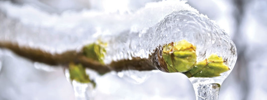 The Great Thaw and the Law:  5 Legal Issues to Watch Out for this Spring