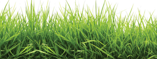 Green With Envy: How to Have the Perfect Lawn
