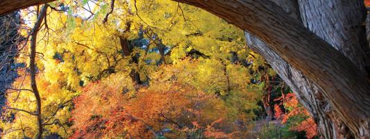 Discover the Morris Arboretum