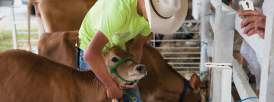 4-H – Farming at the Fair