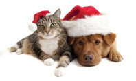 Tips for Holiday Pet Safety and Special Care