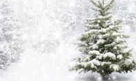 O Christmas Tree! One Family's Quest for the Perfect Tree