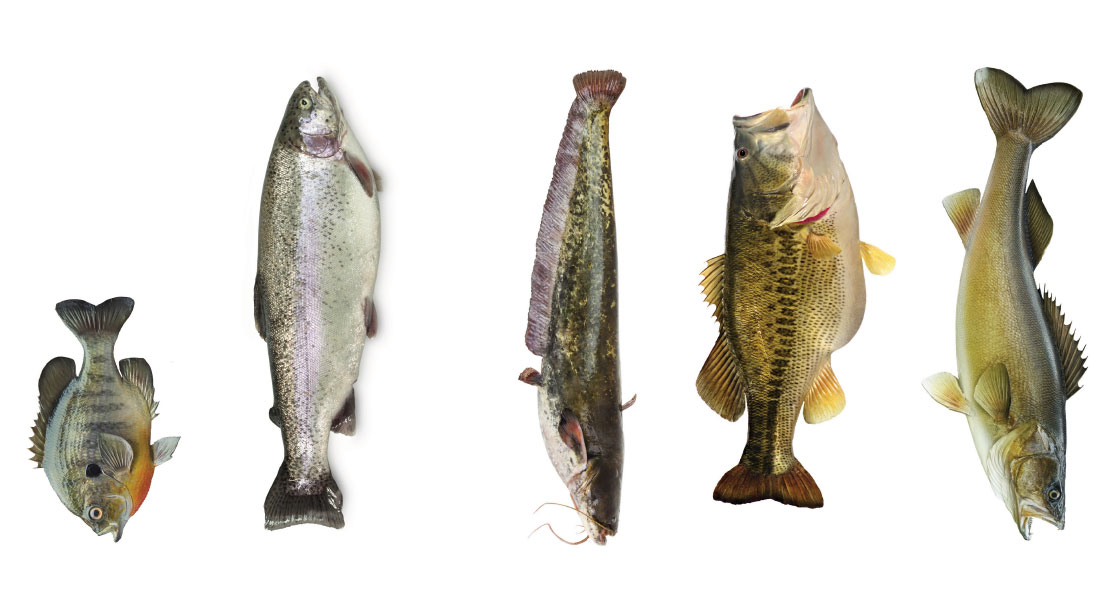 5 Great Tasting Freshwater Fish