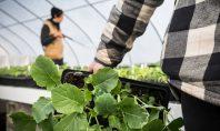 Day in the Life of Organic Farmer Lynn Trizna