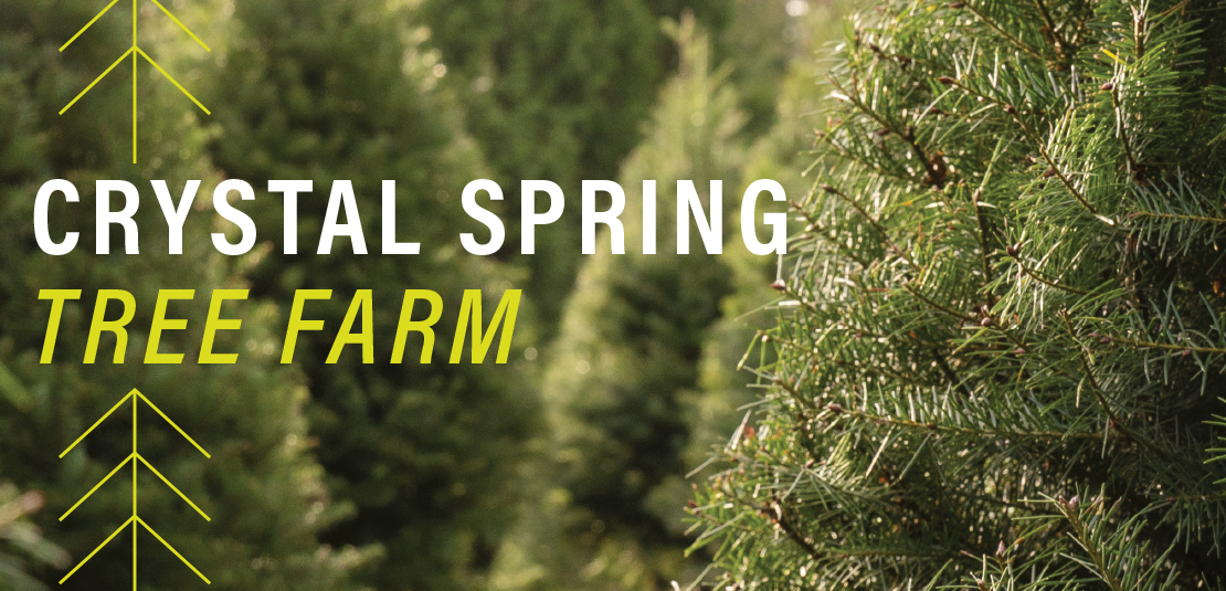 crystal springs tree farm slider image