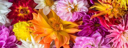 Blooms in Hellertown